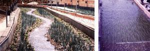 Izquierda: vista del primer modelo físico, de lecho fijo, mirando aguas abajo (el de lecho móvil se adivina a su derecha). El tramo estudiado es aproximadamente la mitad de las figuras 4 y 5-arriba (del azud hasta cerca de A). A la derecha: foto de las plantas de plástico que representan el carrizal, ensayadas en canal recto para determinar su resistencia al flujo.