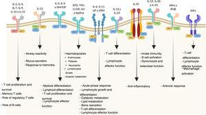 Biological functions of the JAK pathways.