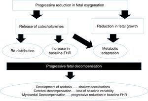 Pathophysiology of chronic hypoxia.