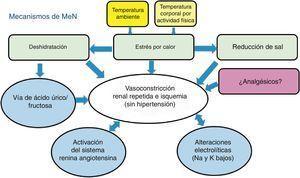 Mecanismos propuestos de lesión renal crónica en la nefropatía mesoamericana.