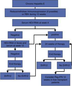 Recommended management algorithm for the treatment of chronic hepatitis E.