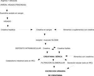 Metabolismo y fisiopatología de la creatina/creatinina.