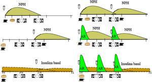 Distribución de los hidratos de carbono a lo largo de las 24h según la pauta y el perfil de acción de las insulinas. AR: análogo de insulina rápida; NPH: neutral protamine hagedorn; insulina basal: glargina U:100, glargina U:300, degludec, detemir.