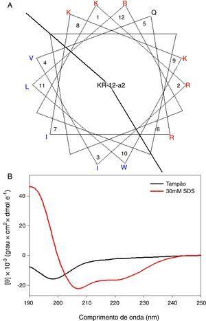 (A) Diagramas em roda α‐helicoidal para KR‐12‐a2. Os aminoácidos carregados positivamente e hidrofóbicos são representados usando as cores vermelha e azul, respectivamente. A linha indica a interface entre a face hidrofóbica e a face positivamente carregada. (B) Espectros de Dicroísmo Circular (DC) dos peptídeos em solução‐tampão de fosfato de sódio 10mM, pH 7,2, e micelas de Dodecil Sulfato de Sódio (DSS), 30mM.