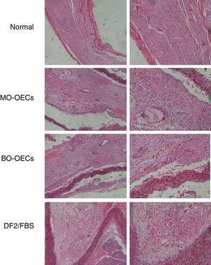 Observação histológica do nervo regenerado em três grupos sob microscopia óptica.