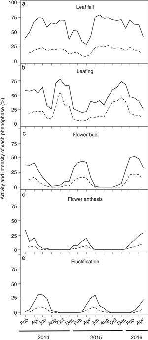 Monthly time series of leaf phenology and reproductive events of Pilocarpus microphyllus plants growing under natural conditions (undisturbed areas) in the Carajás National Forest, Pará/Brazil. (a) Leaf fall, (b) Leafing, (c) Flower bud, (d) Flower anthesis and (e) Fructification. Data were recorded from 414 plants over 27 months. Solid and dotted lines represents the activity and the intensity of each phenophase, respectively.