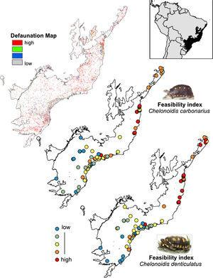 Comparison between Brazilian Atlantic Forests defaunated areas pattern, derivate of surrogate mammals' richness proposed by Jorge et al. (2013) and the feasibility index of Chelonoidis species into the Atlantic Forest remnants.
