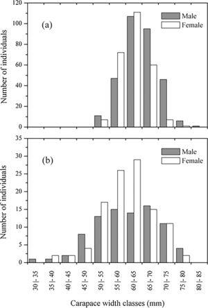 Distribution of the carapace width of the Ucides cordatus specimens harvested in the mangrove forest of the Paraíba do Sul River estuary during the sampling periods.