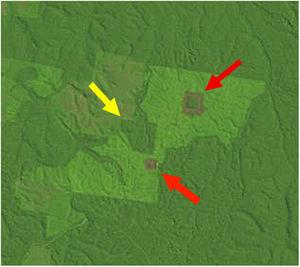A LANDSAT image from the BDFFP study area in July 1992 showing fragments of different sizes and vegetation of different ages at Fazenda Porto Alegre. The largest fragment (100-ha, yellow arrow) is surrounded by both a mature border and matrix, whereas the smaller two fragments (1- and 10-ha, red arrows) are surrounded by young borders and a mature matrix (from http://glovis.usgs.gov).