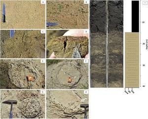 Development of microbially induced sedimentary structures in soda lake Salina Coração. (A–D) Preliminary stages with traces of EPS and bacterial mats encountered along the shorelines of soda lakes. (E–H) Diagenesis of Ca carbonates and Fe oxides from lithifying microbial communities in circular shapes, similar to stromatolites. (I) Organic C-rich sapropel development in a sediment core retrieved from a soda lake and lithological log of the core pictured. Most soda lakes in lower Nhecolândia exhibit similar stratal development, suggesting a common set of processes influenced their formation.