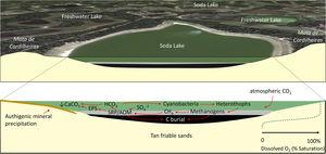 General biogeochemical model of a typical C-sink soda lake in Nhecolândia, Pantanal (after Bergier et al., 2016&#59; McGlue et al., 2017&#59; Guerreiro et al., 2018). See text for details.