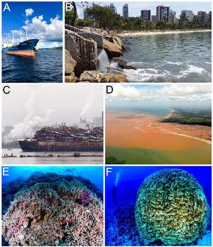 Doubts and hope for the world's marine biodiversity. Photos by Luiz A. Rocha, Felipe Buloto, Ingrid Taylar and Eric Mazzei.