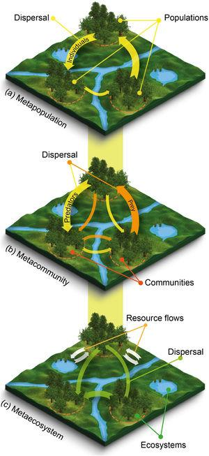 Schematic representation of metaecological entities: (a) a metapopulation, (b) a metacommunity, and (c) a metaecosystem. In each landscape, the orange dashed circle indicates local populations, communities or ecosystems in forest patches connected through the flow of organisms (colored arrows) and resources (white arrows). Note that flow rate (arrow thickness) may vary across the landscape. Even though metacommunities are defined as sets of communities linked by the dispersal of individuals of multiple interacting species, for the sake of simplicity much of what ecologists have studied as metacommunities are actually sets of assemblages of species within the same trophic level (not shown). Resource flows represented in the metaecosystem could be forest patches contributing leaf litter to streams and lakes, in turn contributing emerging insects for birds foraging in forest patches.