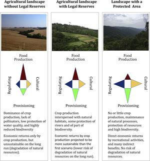 Contribution of landscapes with different levels of native vegetation protection to the provision of ecosystem services.