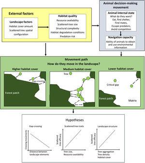 The movement ecology framework (Nathan et al., 2008; Fahrig, 2007) applied to movement across an open matrix, showing the decision-making using scattered trees. The blue background components are related to animal decision-making (internal state, navigation capacity). The yellow background components refer to external factors affecting decision-making (landscape factors, habitat quality). The movement path and the decision to use the scattered trees depend on how animals perceive and use environmental information. Thus, we predicted that a bird's decision to (1) cross swaths of inhospitable habitat in a single flight (gap-crossing), or to use scattered trees as stepping stones will depend on the distance to the nearest habitat patch (gap size). In large gaps, the use of scattered trees in movement path will be essential to reach the neighboring habitat patches; (2) use some specific scattered trees will depend on plant species trait (tree size is a proxy for perching spot, resources: presence of fruits, flowers, and nests); (3) use of scattered trees depends on landscape structure (particularly, the amount of habitat cover, habitat patchiness, and matrix quality). All these decisions need to be made by weighing trade-offs between the costs of predation risk and benefits of additional or alternative resources elsewhere than the current patch.