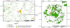 Study area in human-modified landscapes in Atlantic Forest, Brazil. We used a stratified random strategy considering two spatial scales to define the sampling units. At larger scale (A, considering 1.5km buffers around the centroid of the focal forest patch), where we selected eight landscapes. In each large landscape, we selected 10 sampling scattered trees, where we measured landscape metrics at finer scale (B, considering 100m buffers around the scattered trees), except for 1 landscape that sampled 9 trees.
