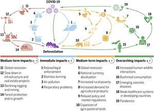 Feedback loops between tropical deforestation and the COVID-19 pandemic. Zoonotic diseases, public health, economy, agriculture, and forests may all be reciprocally linked in complex positive and negative feedback loops with overarching consequences for nature and society.