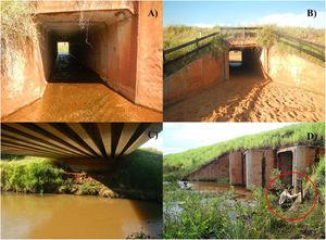 Types of underpasses monitored along Highway MS-040 in Mato Grosso do Sul State, Brazil: (a) drainage culvert, (b) cattle box, (c) bridge and (d) view of drainage culvert, red circle shows the installation of the camera-trap outside of the structure.