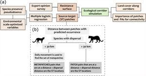 Schematic representation of the methodological framework applied to assess the importance of forest fragments in sustaining connectivity for four carnivores in the Atlantic Forest (a). Each step was applied individually to the target species and the selection of ST locations (i.e., forest patches between which the dispersal routes were simulated) was performed according to the species movement capacity (b).