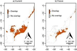 Overlap between the environmentally suitable areas of Euterpe edulis and Euterpe oleracea across the Atlantic Forest. Orange pixels are climatically suitable for both species under current (a) or future (2070; b) climatic conditions. (For interpretation of the references to color in this figure legend, the reader is referred to the web version of this article.)