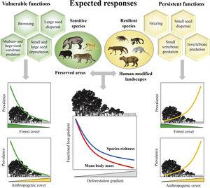 Expected patterns for the ecological functions. Vulnerable functions (i.e., those performed by large-sized species and species sensitive to habitat loss) such as browsing, large seed dispersal, small and large seed depredation, medium- and large-sized vertebrate predation, are negatively affected by reductions in patch size and forest cover and increasing anthropogenic cover. Conversely, these factors benefit species that are resilient to habitat loss and environmental modifications, increasing the prevalence of persistent functions, such as grazing, small seed dispersal, and small-sized vertebrate and invertebrate predation. The pattern of the ecological functions will follow the decrease in assemblage species richness and mean body mass as deforestation increases.
