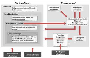IPLC landscape transformation framework for identifying and integrating sociocultural and environmental components. IPLC' landscape transformations occur through cultural niche construction and involve interactions among sociocultures and environments. Environment includes two components: ecological processes and ecological patterns. Pattern elements, such as species composition and abundance, can be generated through four ecological processes, which, in turn, are influenced by non-anthropic phenomena (e.g., windstorms, lightning and animal behaviors) and human management systems. Socioculture includes four components: worldview, social institutions, management systems and local knowledge. Management systems include human behaviors that transform landscapes via environmental manipulation that acts on ecological processes. Such management encompasses local knowledge and respects social institutions, which, in turn, are grounded in a local worldview. At the same time that socioculture transforms landscapes via environmental management, environment influences socioculture, either through ecological processes or ecological patterns, since both of them can influence all sociocultural components. These reciprocal relationships between socioculture and environment occur from generation to generation through cultural niche construction. For example, ecological patterns modified by one generation will be bequeathed by the next generation, so they represent an ecological inheritance. In addition, through orality, imitation and observation, the ways one generation thinks and acts (i.e., their worldview, social institutions, management systems and local knowledge) are transmitted to the next generation, so there is sociocultural inheritance across generations. Finally, historical events, by influencing socioculture, influence the way such reciprocal relationships between socioculture and environment occur in space-time, so that IPLC' landscape transformations can best be unders