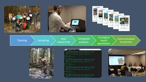 Graphical representation of the STREAM workflow for community-based DNA biomonitoring of benthic invertebrates.
