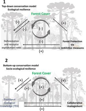 The schematic top-down and bottom-up conservation models of Araucaria Forest systems are self-organized in contrasting ways, with different feedbacks. Solid lines represent positive/negative effects. Cycle schemes (gray shaded) represent the feedback loop, its direction (i.e. counter-clockwise) and its result: negative/buffer effect or positive/self-reinforcing state. 1. Schematic representation of the interactions involved in top-down policies, such as Strictly Protected Areas. This scheme improves only a portion of the target ecosystem, neglecting potential socio-ecological interactions (i.e. local people). This classical conservationist approach creates a buffer feedback, i.e. it sustains the current state. Excessive resource exploitation or deforestation generates protective measures that benefit forest cover. However, a forest protected by top-down measures may not completely avoid these disturbances (e.g. deforestation and overexploitation) and might not contribute to other external stressors, such as climate change. They also reduce the benefits for local peoples, who are virtually excluded from the system. 2. Schematic representation of the interactions produced by bottom-up policies. Independently from restrictive measures, this schematic socio-ecological system indicates an increase in the system's resilience, due to a self-reinforcing mechanism that promotes araucaria forest expansion. Hence, by incorporating TEK and co-management initiatives, this scheme increases the general resilience of the social-ecological system. Note: our conceptual model is not mutually exclusive, both top-down and bottom-up strategies co-occur within AFS and contribute to maintaining native forest remnants.