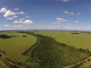 Restored wildlife corridor in Pontal do Paranapanema. (WeForest).