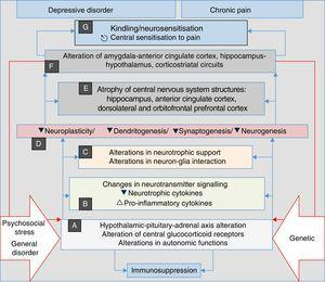 Stress, general illness and genetic factors are the terrain in which the processes that converge into clinical manifestations of depression, anxiety, pain and insomnia are triggered. They begin with autonomic alterations and in the neuroendocrine axis (A) that trigger neurochemical changes (B) and changes in the trophic support (C), which generates microstructural (D) and later macrostructural (E) and functional (F) alterations, establishing a pathological complex (G) that can be common to the four clinical manifestations. Note the perpetuation of the psychopathological phenomenon resulting from the influence of (F) on (A) (double red lines).