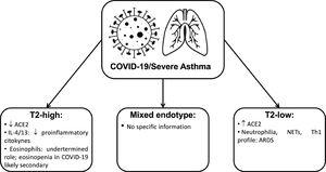 Summary of the main evidence about severe asthma endotypes and COVID-19 disease mechanisms. Legend: ACE2: angiotensin-converting enzyme 2 receptor; COVID-19: coronavirus disease 2019; IL: interleukin; NETs: neutrophilextracellular traps; Th1: T Helper1 cell.