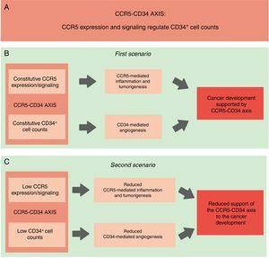 Schematic representation of our hypothesis. (A) CCR5-CD34 axis: functional interactions between CCR5 and CD34. (B) CCR5-CD34 axis supports the development of different types of cancer. Constitutive: normal/expected levels of CCR5 and CD34+ cells. (C) Reduced CCR5 expression in association with lower CD34+ cell counts would protect against the establishment of the tumor microenvironment and the development of cancer.