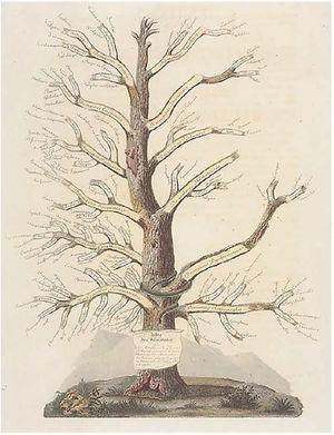 Árvore das Dermatoses, de Jean‐Louis Alibert. Fonte: Coleção Le musée de l'Hôpital Saint‐Louis.54
